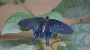 Niagara Parks Butterfly House
