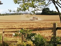 Harvesting in Wiltshire