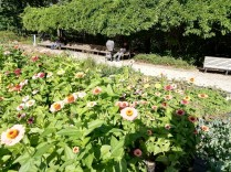 Miracle Garden in Eramsus