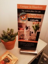 Flyer for café