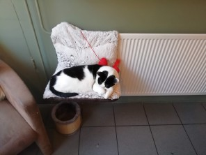 Eva snuggled up to radiator