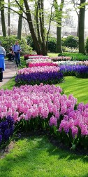 Keukenhof April 2019